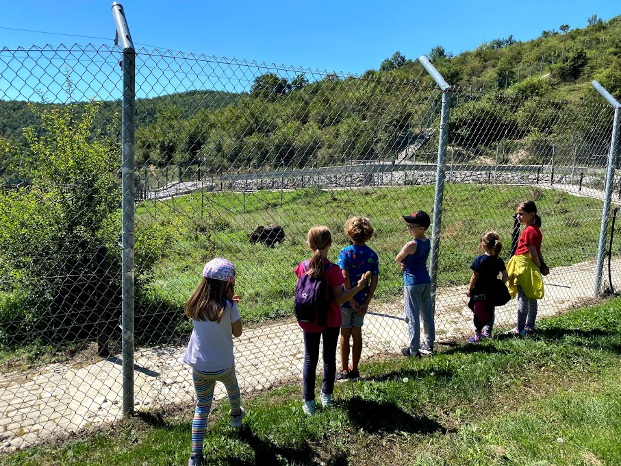 From Gërmia to the Realm of Rescued Bears